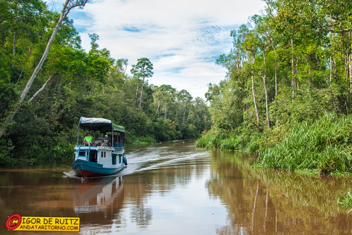 Le barche lungo il Sungai Sekonyer