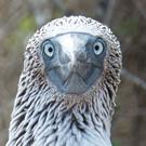 Le Galapagos senza un mutuo