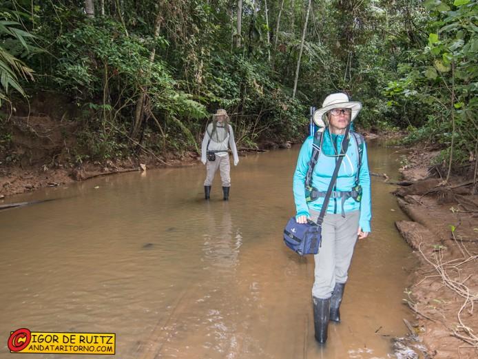 Il Parque Nacional del Manu