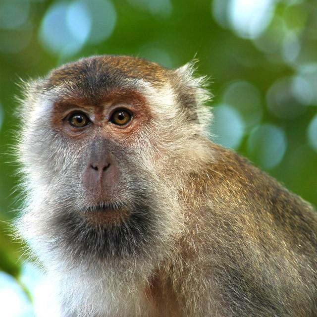 Malesia e Borneo, trentacinque chili di piacere