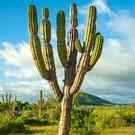 Messico del Nord, un mestiere pericoloso