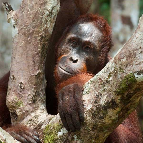 Kalimantan, se non è avventura questa!