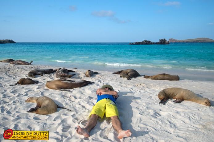 Relax tra i leoni marini alle Galapagos