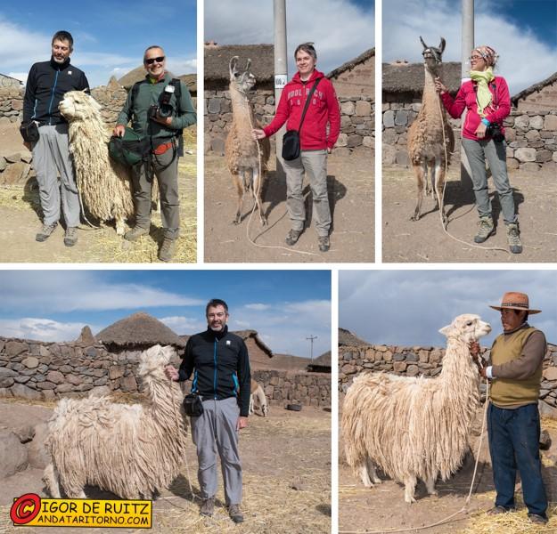 Ce la siamo fatti tutti la foto con il lama e l'alpaca? Possiamo andare ora?