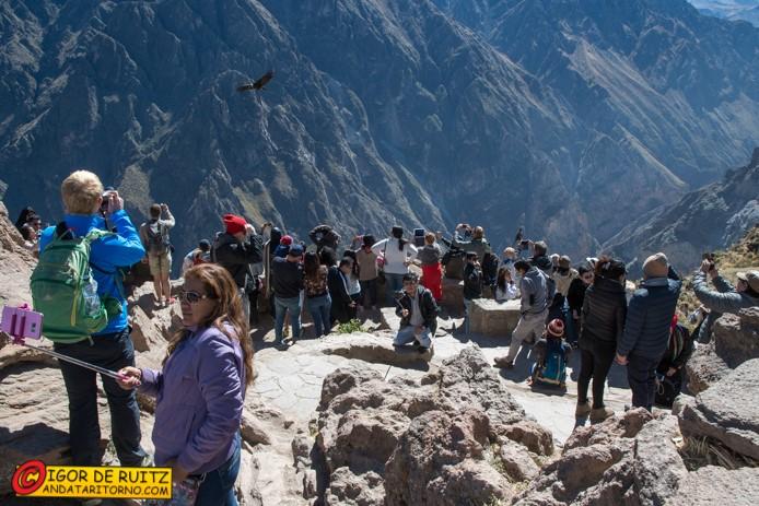 Cruz del Condor (Canyon del Colca)