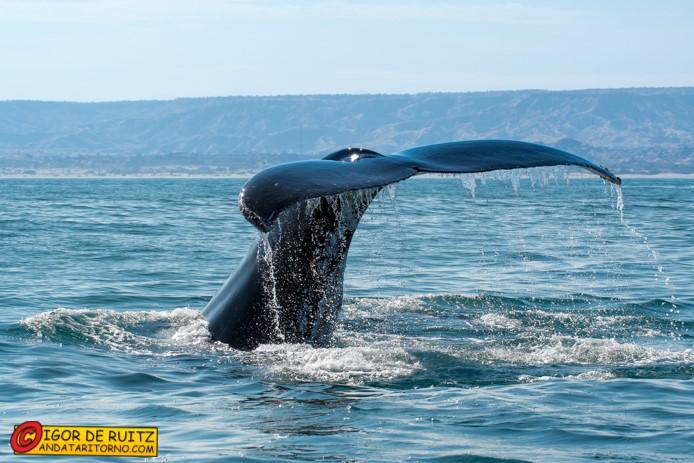 Le balene di Máncora