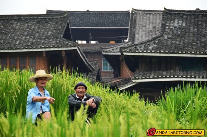 Coltivazioni e architettura tradizionale presso Chengyang