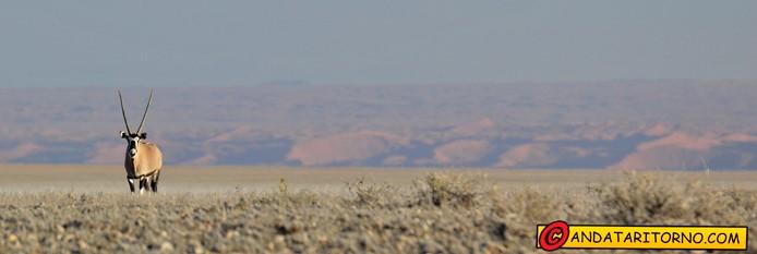 Uno sguardo sul Namib