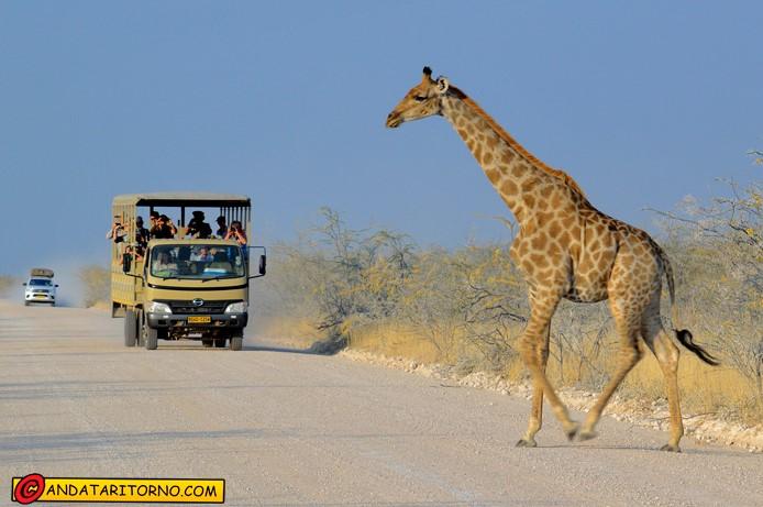 Giraffa ad Etosha National Park in Namibia
