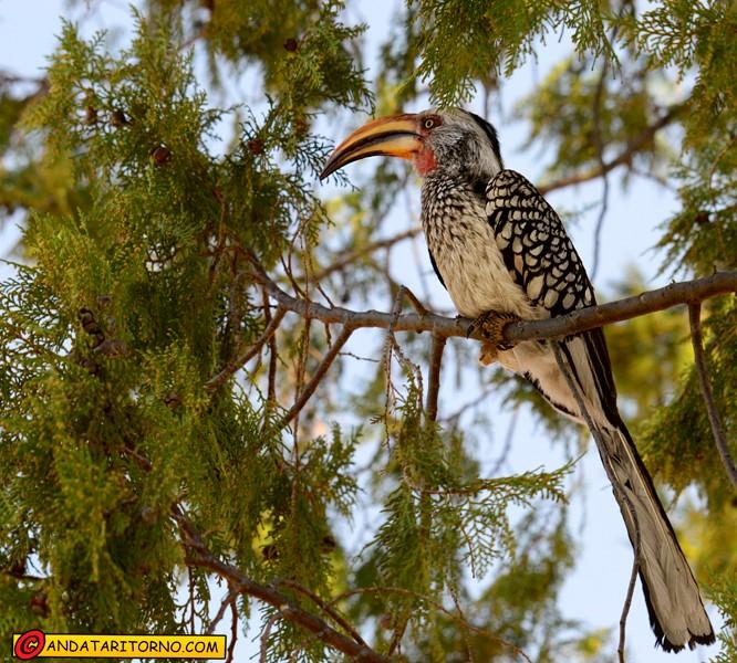 Wabi Game Reserve