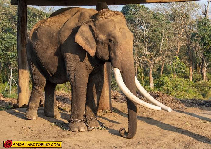 Centro di addestramento elefanti