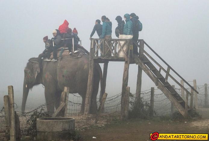 Safari a dorso di elefante