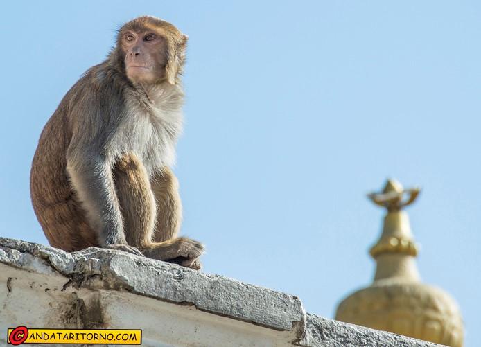 Tempio di Pashupatinath
